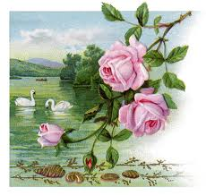 Swans and roses pictured on 1917 greeting card.
