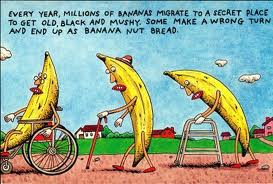 We all know where over-ripe bananas end up.