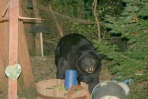 There's no shortage of bears in Alaska or Pennsylvania.