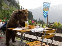 Picnic anyone? That included this brown bear.