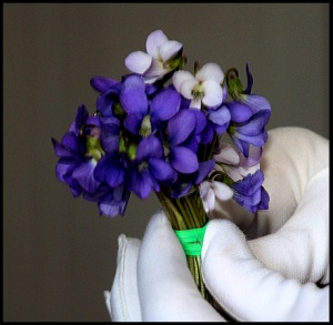 A nosegay of violets from our yard.