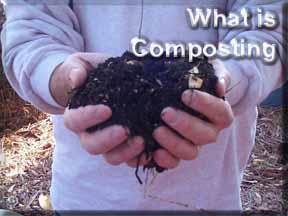 composting 9