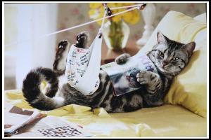 1 sick cat IMG_1572