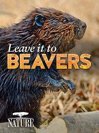 Beavers 14