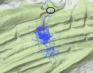 This graph shows the deer's movements, mainly in a small area.